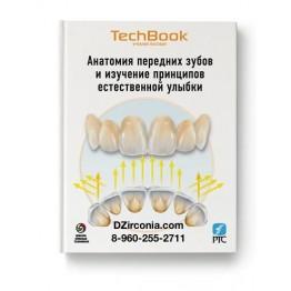 Анатомия передних зубов и изучение принципов естественной ульбки